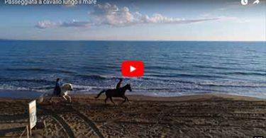 Passeggiata a cavallo lungo il mare della maremma Toscana